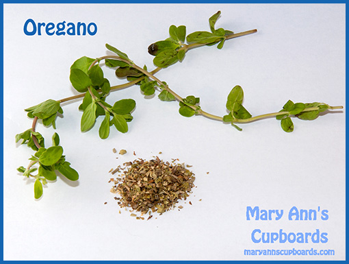 Oregano by Michael Zimmerman