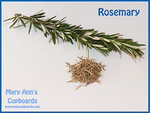 Rosemary by Michael Zimmerman